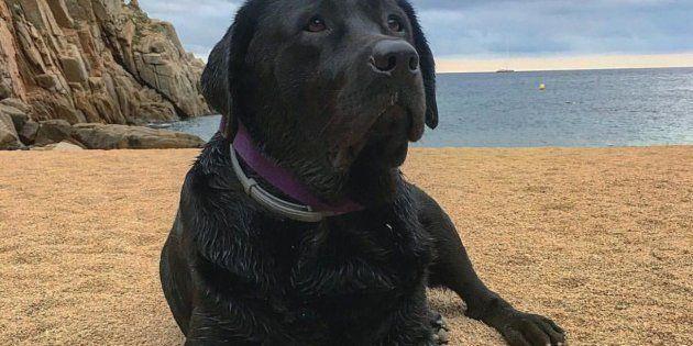Bongo, el perro que ha puesto patas arriba una localidad de