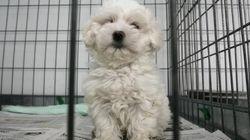 Sin corazón: más de 137.000 perros y gatos abandonados en España en