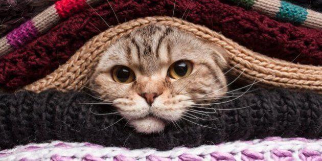 El consejo de la Policía Nacional sobre los gatos, el frío y los motores que triunfa en