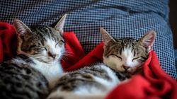 Estos inseparables gatitos lograrán activar tu espíritu