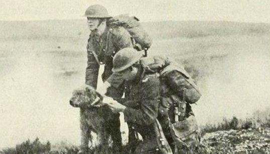 20 increíbles imágenes de animales en la Primera Guerra Mundial