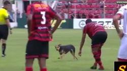 Este perro se cuela en un partido y se resiste a salir, pero...