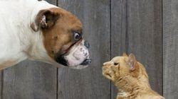 Amantes de los gatos versus amantes de los perros: ¿no podemos llevarnos