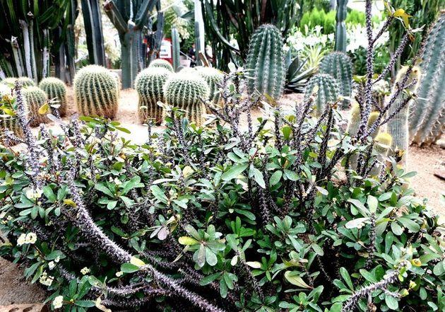세계꽃식물원에 핀
