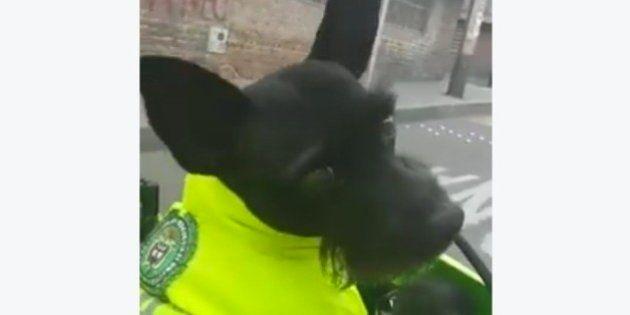 La red se enamora de Ñero, un perro policía que patrulla hasta en
