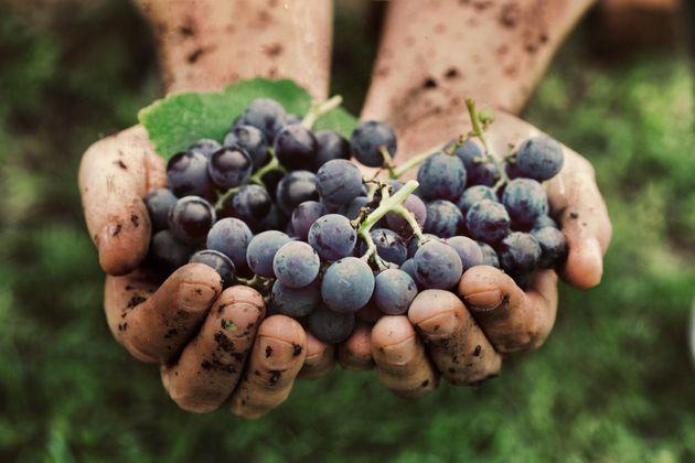 Las decisiones y los vinos que cambiarán el