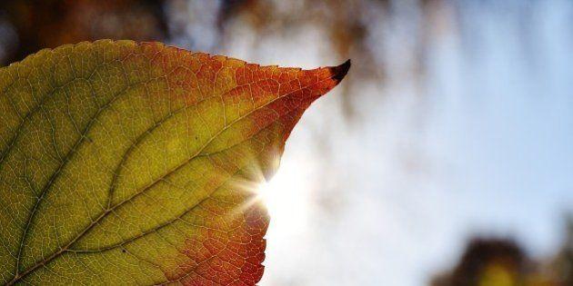 Por qué noviembre no es un mes tan marrón: las citas más 'verdes' del