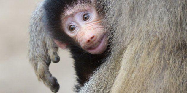 Fotos de animales en familia: 21 fotos de bichinos que harán que te apetezca abrazar a
