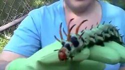 Si te dan asco los insectos, mejor no veas este