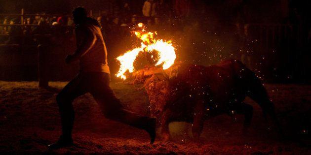 Incidentes y cuatro detenidos durante el 'Toro de Júbilo' de Medinaceli