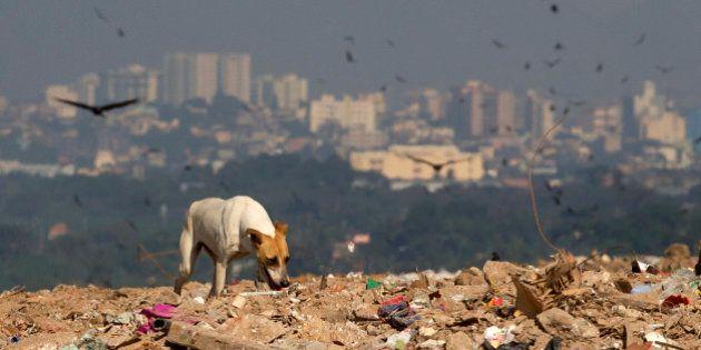 La Comunidad de Madrid prohibirá sacrificar animales