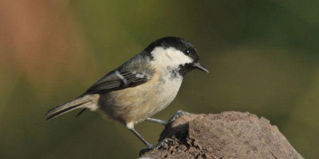 El vídeo-tuit viral del pájaro que se divierte en una cinta