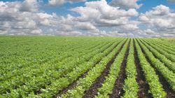 Los pesticidas utilizados en la agricultura aumentan el riesgo de