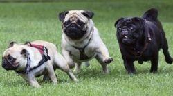 Polémica en Málaga por la instalación de un parque canino en este