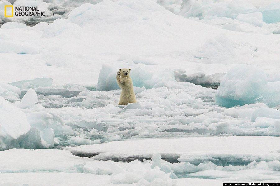 Impresionantes imágenes de naturaleza salvaje