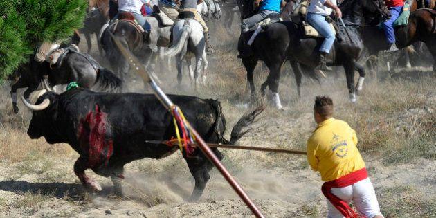 Toro de la Vega 2015: Los argumentos a favor y en contra