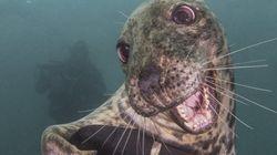 ¡Pa-ta-ta! La foto de esta foca sonriente bien vale un premio de