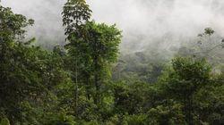 Alimentar a la humanidad o preservar los bosques, ¿qué importa