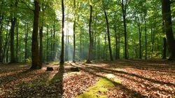 'Shirin Yoku': baños de bosque contra el