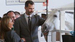 El cara a cara de Letizia y el caballo