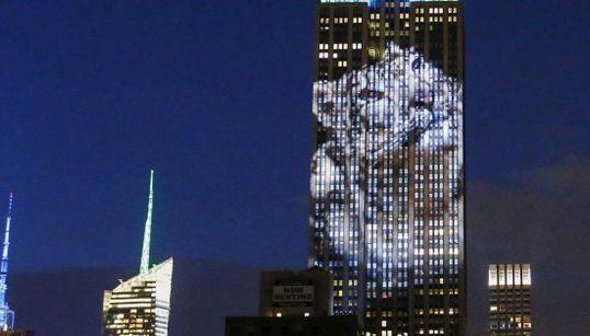 La fauna amenazada se encarama al Empire State