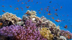 ¿Por qué unas especies se adaptan mejor al calentamiento del océano que