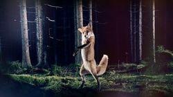 The Fox sigue arrasando en YouTube