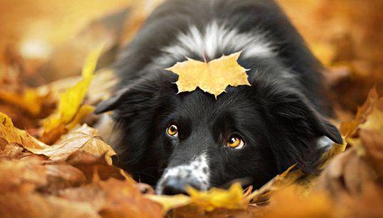 Fotos de perros bonitas ¿o un poco
