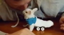 Wheelz, el conejito que da una lección de superación