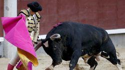 ENCUESTA: ¿Deben protegerse las corridas de toros como Patrimonio