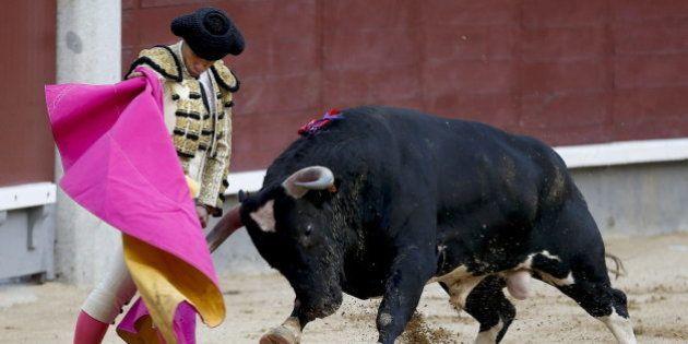 ENCUESTA: ¿Deben protegerse las corridas de toros como Patrimonio Cultural Inmaterial de la
