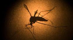 Consejos de salud para prevenir el virus del Zika en las