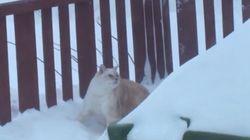 Gato contra nieve: la batalla