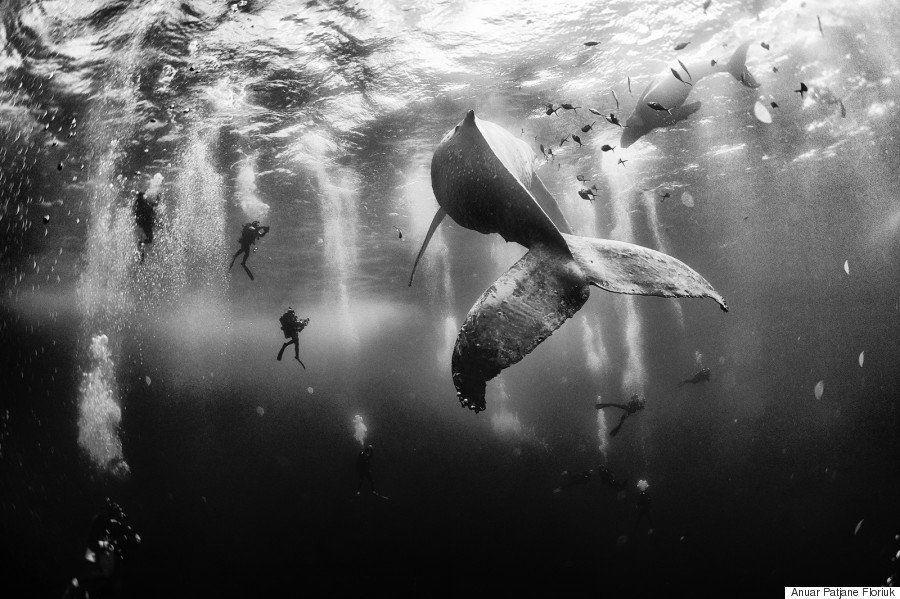 Encantador de ballenas: la foto ganadora del National Geographic Traveler Photo Contest