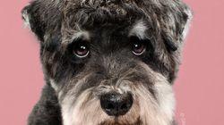 Siete fotos de perros antes y después de pasar por la