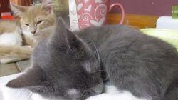 El gato roncador que no deja dormir a su