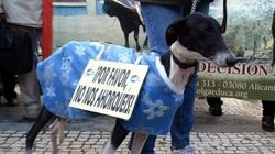 Investigan a la dueña de un perro que pagó 10 euros para que ahorcaran al