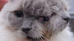 Este gato, que figura en el Libro Guinness, muere a los 15 años