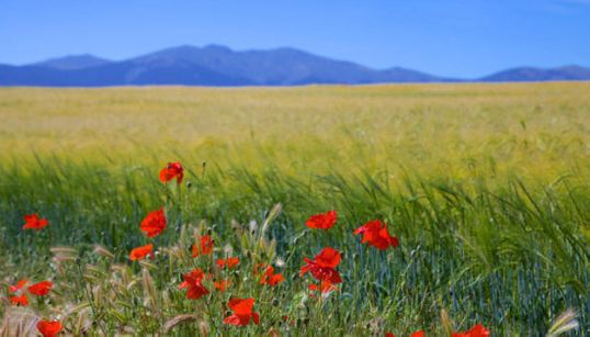 Ocho espectaculares floraciones para contemplar esta
