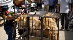 Miles de perros morirán en este festival de cocina de