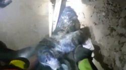 El emocionante rescate de un perro atrapado bajo los escombros del terremoto en