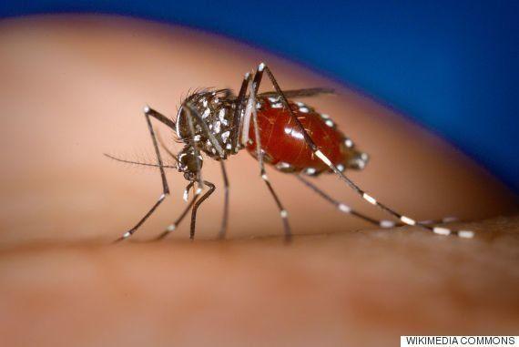Virus del Zika, ¿nueva amenaza o alarma