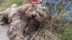Benji, el perro callejero que aprendió a dejarse
