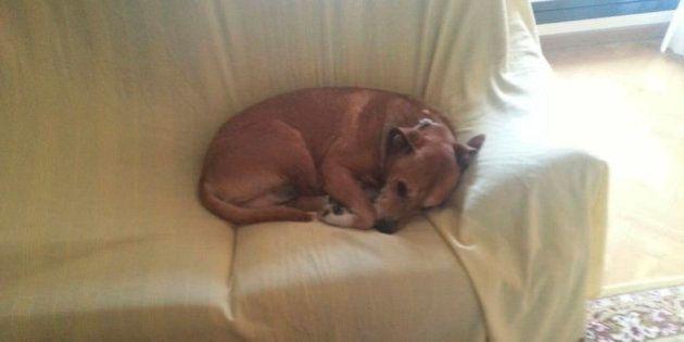 Excalibur, el perro de la auxiliar contagiada con ébola,