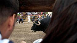 El Constitucional avala por unanimidad la prohibición de matar al Toro de la