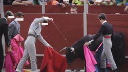 PACMA denuncia la crueldad de esta escuela de tauromaquia premiada por el