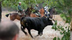Taurinos y animalistas vuelven a enfrentarse por el Toro de la