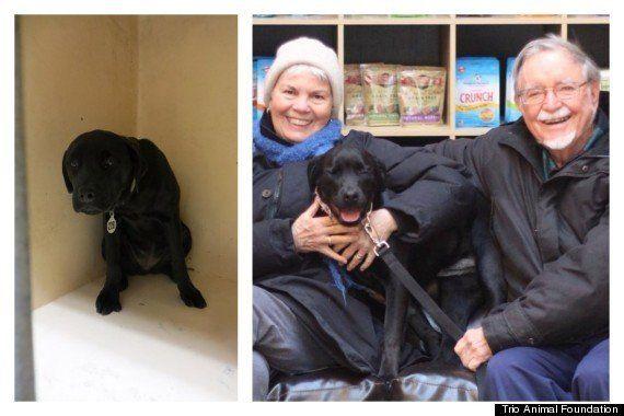 Fotos de perros rescatados antes y después de ser