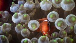 Mira los arrecifes de coral antes de que desaparezcan