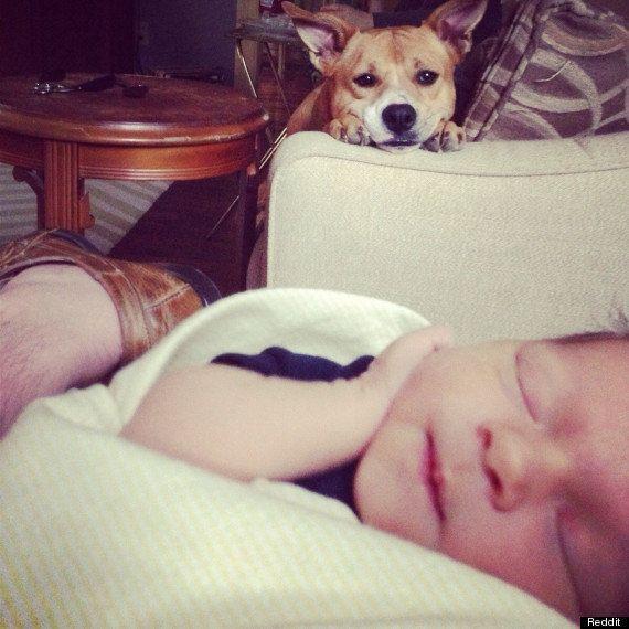 Perros y bebés: la foto viral de la perra mirando al nuevo miembro de la